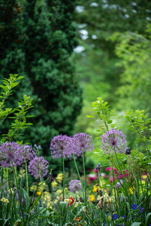 Besuch im Doschka-Garten in Dettingen